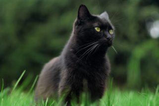 Gdy ci kot przebiegnie drogę. Dlaczego sportowe gwiazdy są przesądne?